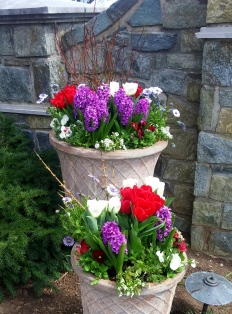 Redtwig dogwood, red and white tulips, purple hyacinths, red and white pansies, red diascia, sweet alyssum, blue/white cape daisies
