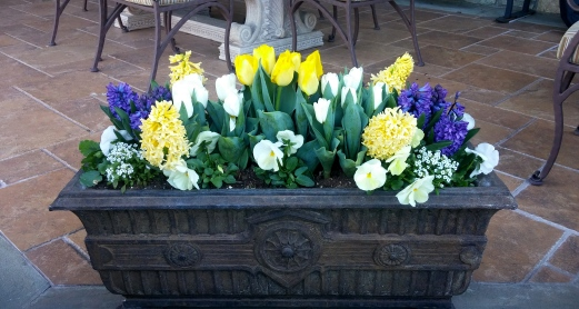 White and yellow tulips, yellow and blue hyacinths, white pansies, sweet alyssum