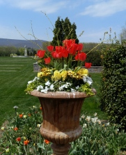 Yellow dogwood branches, red tulips, yellow hyancinths, yellow cape daisies, white pansies, sweet alyssum, ivy